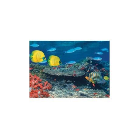 Animalbazar les poissons d 39 aquarium for Jouet aquarium poisson