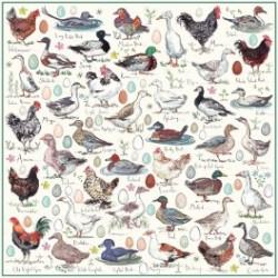 Poulets canards et oies