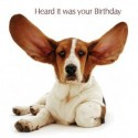 Carte postale humoristique anniversaire. Basset hound
