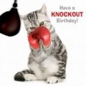Carte postale humoristique anniversaire. Chat boxeur