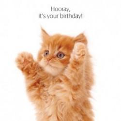 Carte postale humoristique anniversaire.Chat roux