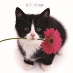 Carte postale représentant un chat noir et blanc