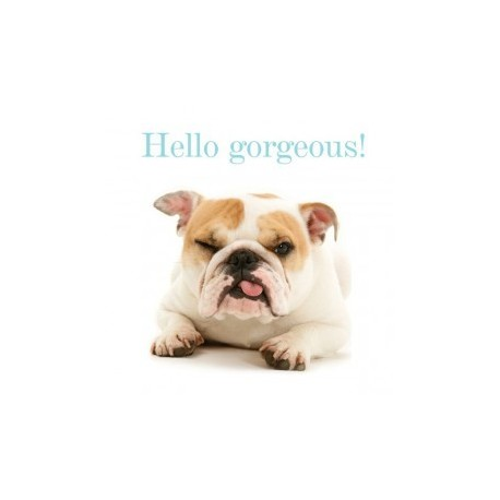 Carte postale représentant un bulldog goguenard