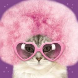 Carte postale représentant un chat funky