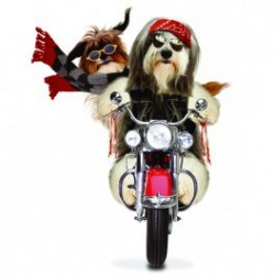 Carte postale représentant un bearded collie biker