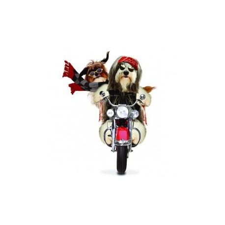Carte postale représentant un bearded collie biker