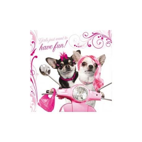 Carte postale représentant un couple de chihuahuas funny