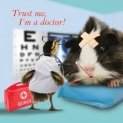 Carte postale représentant un cochon d'Inde chez le docteur