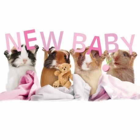Carte postale représentant des cochon d'Inde baby boys