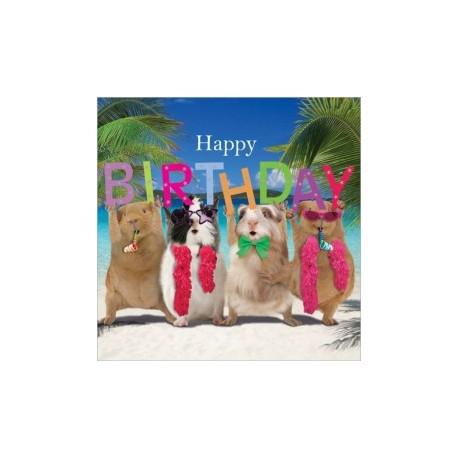 Carte postale représentant des cochon d'Inde sous les tropiques