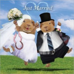 "Carte postale représentant un couple de cochon d'Inde ""just married"""