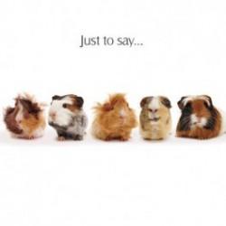 Carte postale représentant les cochons d'Inde en folie