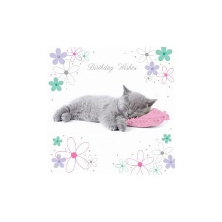 Carte postale représentant le gros dodo du petit chat