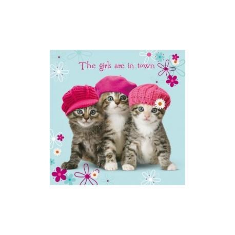 Carte postale représentant trois chatons dans la ville
