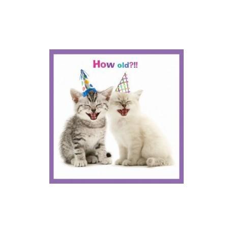 Carte postale représentant le fou rire des chatons