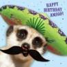 Carte postale représentant le sombrero du suricate