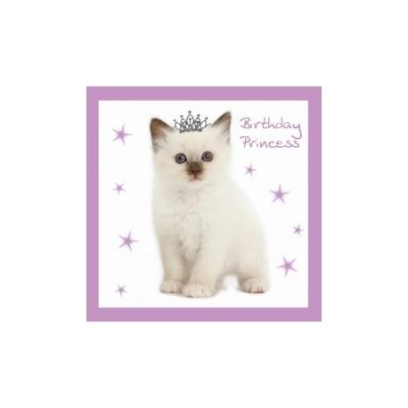 Carte postale représentant le chat prince