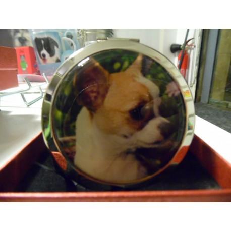 Miroir de poche chihuahua