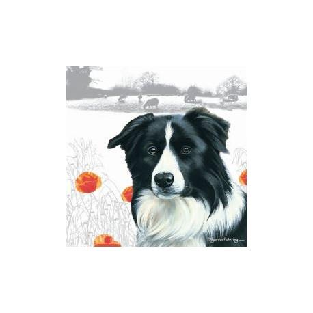 Carte postale représentant un portrait de border collie dans un paysage campagnard