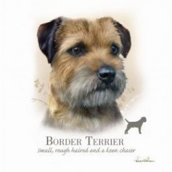 Carte postale représentant un portrait border terrier