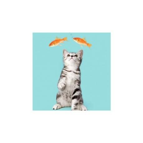 Carte postale Myrna - LE CHAT ET LES POISSONS ROUGES