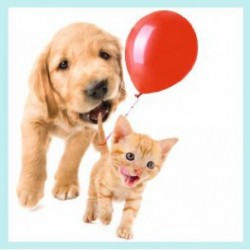 Carte postale Myrna - CHAT CHIEN BALLON