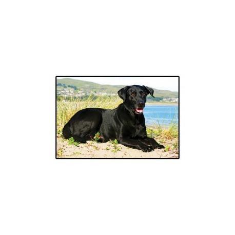 Tapis labrador noir avec photo couleur