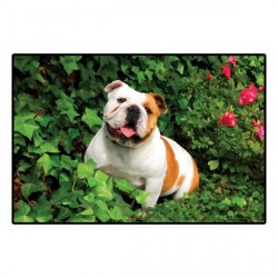 Tapis bulldog avec photo couleur