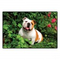 Tapis bulldog avec photo couleur