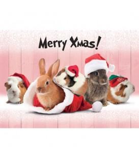 Lot de 6 set de table Merry Christmas decoré de lapins et de cochons d'Inde