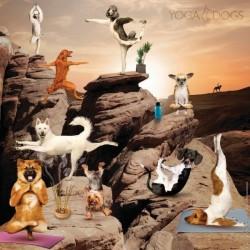 """Puzzle """"le yoga des chiens"""""""