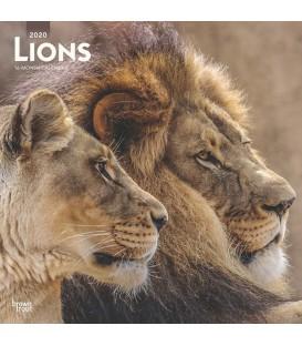 Lions 2020