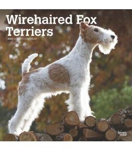 Fox Terrier à poil dur 2020