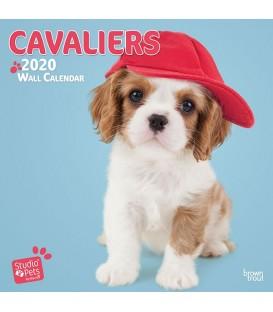 Chiots Cavalier King Charles (Myrna) 2020