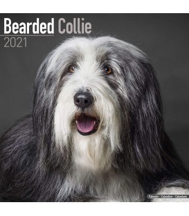Bearded Collie 2021
