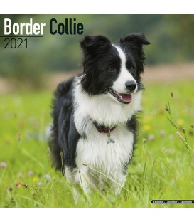 Border Collie 2021