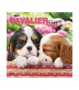 Cavalier King Charles Chiots 2021