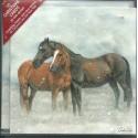 10 Cartes de Noël chevaux sous la neige et leurs enveloppes