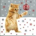 Série de 10 cartes postales (2 modèlesx5) Joyeux Noël Chat