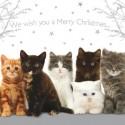 """10 Cartes Noël """"chatons"""" et leurs enveloppes"""