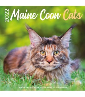 Maine Coon 2022