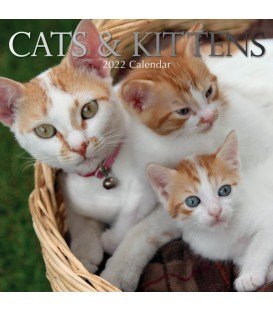 Chats et chatons 2020