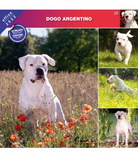 DOGO ARGENTINO 2022 - CALENDRIER AFFIXE