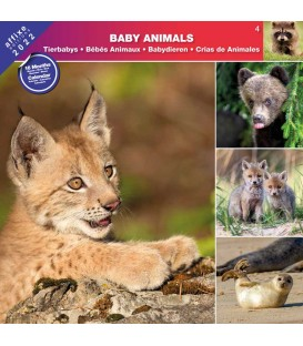 BEBES ANIMAUX 2022- CALENDRIER AFFIXE