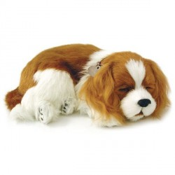 Peluche Perfect Pezzzz cavalier king Charles