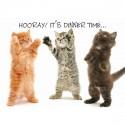 Set de table hourra (chats)